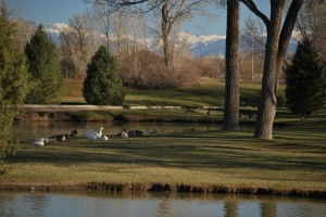 Pond, ducks, trees and mountains